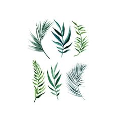 Image result for palm leaf tattoo