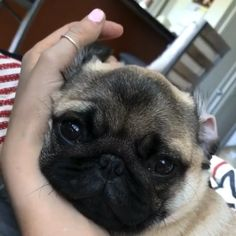 Funny Dog Videos, Funny Animal Memes, Funny Dogs, Pug Videos, Funny Animals, Puppies And Kitties, Baby Puppies, Cute Animal Videos, Cute Animal Pictures