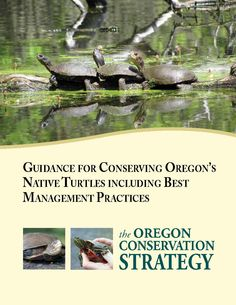 Guidance for conserving Oregon's native turtles including best management practices, by the Oregon Department of Fish and Wildlife