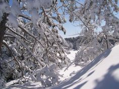 """Today's photo contest pick comes to us from CBC Community member Natalie Hulan.    """"My HAPPY PLACE is hiking at one of Canada's beautiful Provincial Park hiking trails,"""" she writes of this snowy scene."""