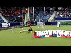 Agility World Championship 2012 FAIL & FUN MOVIE by www.DogSports.cz - YouTube