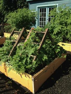 Create a trellis for cantaloupe or watermelon out of an old ladder and some wire