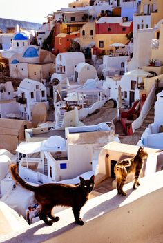 Santorini, Greece by Seungyoon Lee on 500px