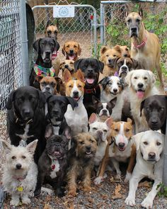 Barkhaus dogs in daycare