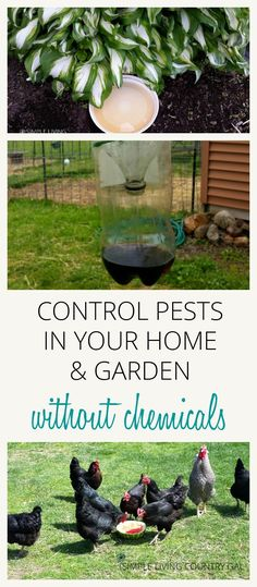 Find out how to deter and even eliminate these pests and animals that can do damage to your gardens, lawns, and homes. All natural, no chemicals. via /SLcountrygal/