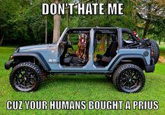 Fenway my Blue Weimaraner in my jeep