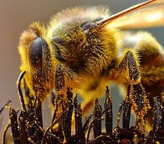 Without the work of this bee,  there's no fruit for you and for me.
