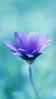 Colors ~ Aqua and Purple Aqua, Turquoise And Purple, Turquoise Cottage, Purple Flowers, Beautiful Flowers, Simply Beautiful, Flower Wallpaper, Iphone Wallpaper, Purple Wallpaper