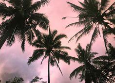 Palm tree skies #summervibes