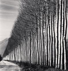 For Sale on - Poplar Trees, Fucino, Abruzzo, Italy, Silver Gelatin Print by Michael Kenna. Offered by photo-eye Gallery. Black And White Tree, Black And White Landscape, Black White Photos, Black And White Photography, White Trees, Line Photography, Abstract Photography, Landscape Photography, Nature Photography