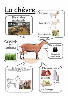 Printable page about la chèvre