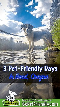 1049 best pet friendly destinations images in 2019 dog friends3 day itinerary in pet friendly bend, oregon