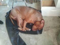 Sleeping on jacket