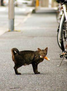 land-like-a-cat:     かわいい : こんにゃくメモ