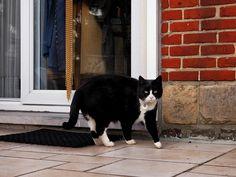 Cat from Zaventem Belgium