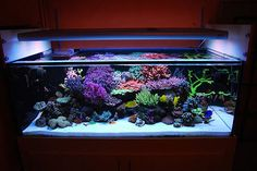 Tank of the Month - July 2008 Saltwater Aquarium Setup, Coral Reef Aquarium, Aquarium Pump, Live Aquarium, Aquarium Design, Saltwater Tank, Marine Aquarium, Aquarium Fish Tank, Fish Tanks