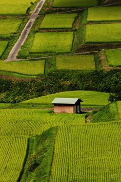 Nozawa Onsen Rice Fields, Japan