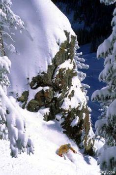 Taos Ski Valley Resort - New Mexico Skiing Photo #2