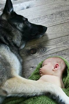 That German Shepherd will always guard that child. Animals For Kids, Animals And Pets, Baby Animals, Funny Animals, Cute Animals, Big Dogs, I Love Dogs, Cute Dogs, Dogs And Puppies