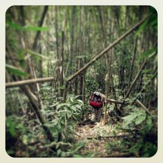 Exploring the jungles of South East Asia (Borneo)