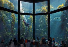 acuario de monterrey california | El acuario se beneficia de una alta circulación de agua de mar que se ...