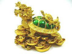 Image result for dragon tortoise in bedroom