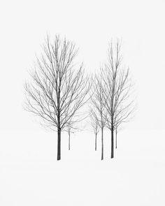 Minimalist Winter Landscape Photography  Black by jennifersquires