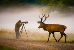 """The other photographer had been staring at the woods for a while when this rather large deer appeared out of nowhere and tiptoed past him. I was laughing so much it was quite hard to take the picture."" — Hans Kruse"