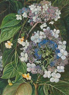 273. Flowers of Darjeeling, India. botanical print by Marianne North