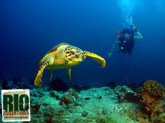 Scuba Diving in Rio de Janeiro