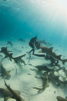 Dive with sharks. Would you dare?