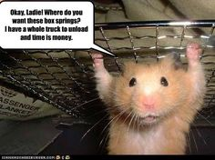 Hilarious Pictures with Captions | Funny hamsters with captions |Funny Animal