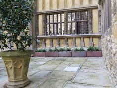 A row of Ironstone 'Padana' Garden Troughs planted up with ferns on display at The Inner Courtyard at Leeds Castle, Kent Garden Troughs, Garden Urns, Garden Planters, Planter Pots, Large Terracotta Pots, Large Garden Pots, Leeds Castle, Square Planters, Corten Steel