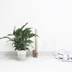 """""""g e t  some clean air with the Peace Lily...our new green crush. Win one at the blog today :) #nature #green #peacelily #mooiwatplantendoen #aprilandmayblog #love #inspiration"""" Photo taken by @aprilandmay on Instagram, pinned via the InstaPin iOS App! http://www.instapinapp.com (06/01/2015)"""