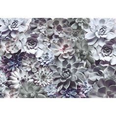 Komar Shades 2.54m L x 368cm W Floral and Botanical Tile/Panel Wallpaper