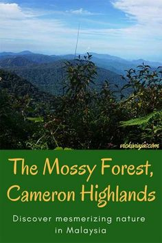 The Mossy Forest, Cameron Highlands, Malaysia I Your comprehensive Guide to the Cameron Highlands, Malaysia I Half-Day Tour I Things to do in Cameron Highlands I Mossy Forest & Tea Plantations I Nature I #Cameronhighlands #Malaysia