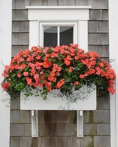 window-boxes-flowers