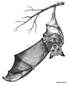 I HATE bats, but this is pretty freakin' cool. Bat Tattoos - BATs-Mega-n-Micro