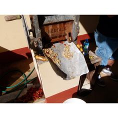 Processing coffee beans in Jamaica