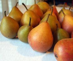 Tiny Seckel pears.