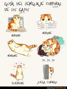 Guía del lenguaje corporal de los gatos.