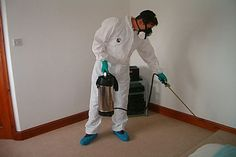 Worried about termites? We provide termite control, treatment and prevention for properties in Northern and Southern Gold Coast. Best Pest Control, Pest Control Services, Termite Pest Control, Mosquito Control, Pest Management, Brisbane, Sydney, Charleston