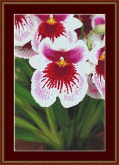 Pink White Orchid Cross Stitch Pattern