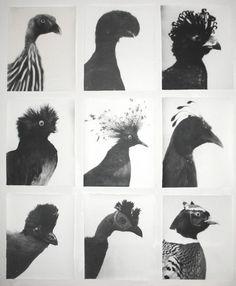 Chicken photo typology.