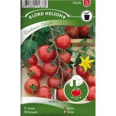 KIRSIKKATOMAATTI 'Gardener's Delight' Suosituin lajike useissa maissa. Kasvihuoneeseen tai ulos suojaiseen paikkaan. Tuottaa vähitellen runsaan sadon erittäin maukkaita tomaatteja.
