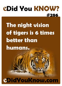 http://edidyouknow.com/did-you-know-286/ The night vision of tigers is 6 times better than humans.