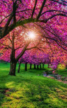 ............ Bom dia! ............ Agradeçamos a Deus pelo que dia que abre as portas para a felicidade, que maravilhosamente traduz a paz ao amanhecer...Louvemos ao SENHOR JESUS pelas muitas bençãos. É um novo dia, chance mais bonita de Glorificarmos ao SENHOR. É Benção, É Glória! ⁀⋱‿✫ ✍ Luciano Bueno