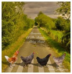 Why did the Chickens cross Abbey Road? to parody The Beatles but w chickens! Farm Animals, Animals And Pets, Funny Animals, Cute Animals, Beautiful Birds, Animals Beautiful, Chickens And Roosters, Pet Chickens, Abbey Road
