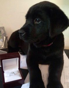 Proposal with a Puppy