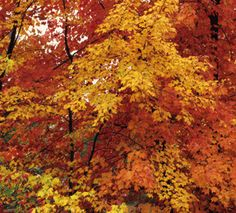 Now is the time to enjoy fall foliage across Iowa. Which trees and shrubs give you the best bet? Check it out: